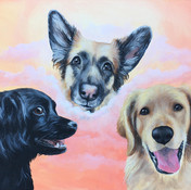 pet portraits by amy yeager jorge three