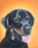 pet portraits raleigh north carolina Amy