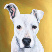 pet portrait with gold background