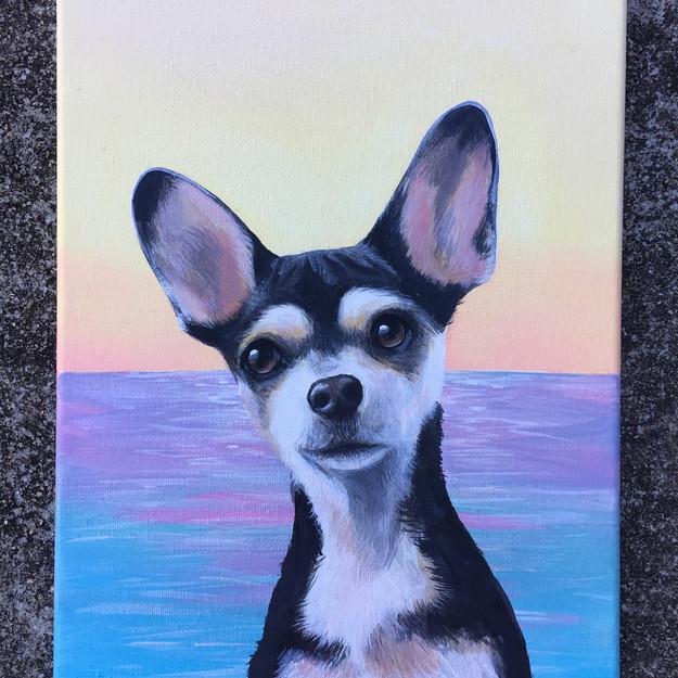 Pet portrait with ocean