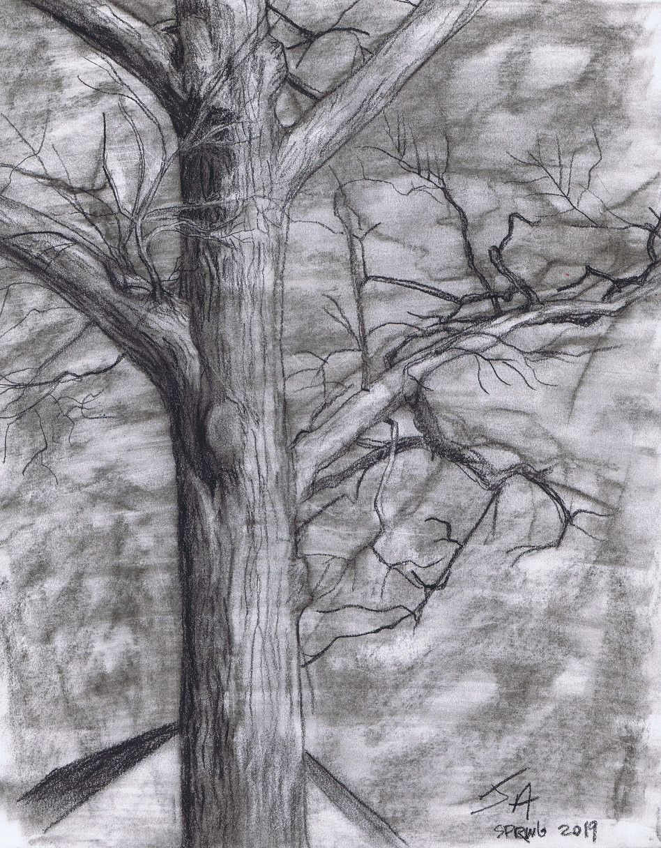 """Winter's end, tree in downtown Silver Spring"", charcoal on 11"" x 14"" paper, 2019, $300"