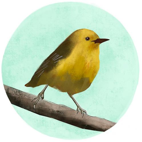 Art Print - Yellow Warbler