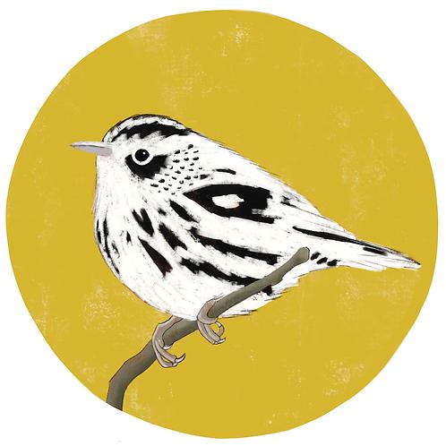Art Print - Black & White Warbler