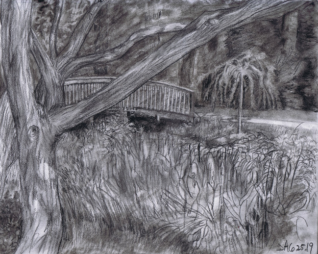 """""""Tree at brookside gardens"""", charcoal on 11"""" x 14"""" paper, 2019, $300"""