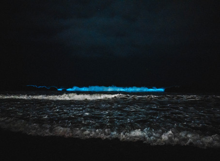 Bio-Luminescent Waves