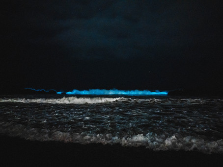 Bio-Luminescent Waves