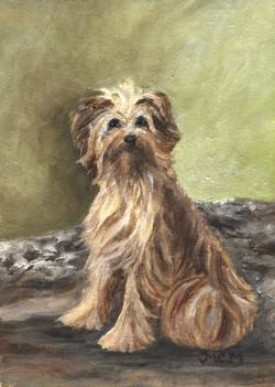 french mountain dog