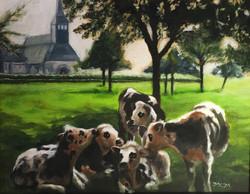 normandy cows