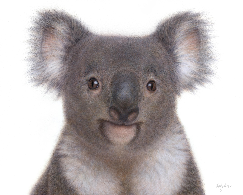 Becky Chan Art | Koala