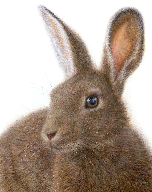 Becky Chan Art | Hare