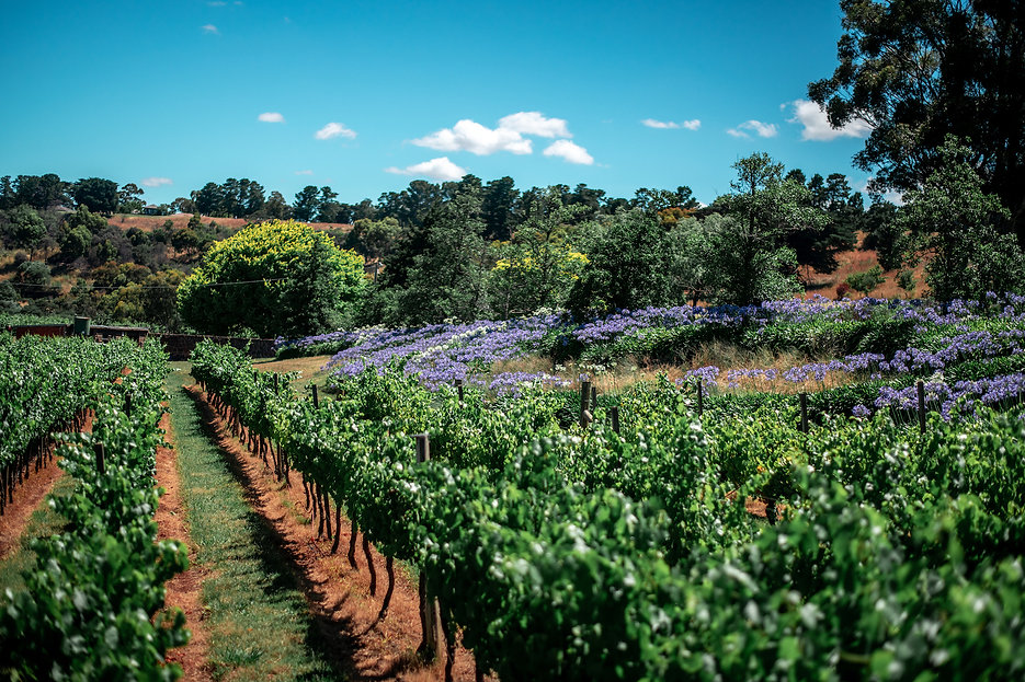 Small winery.jpg