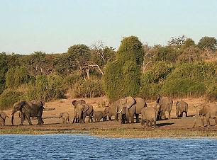Chobe_National_Park_029.jpg