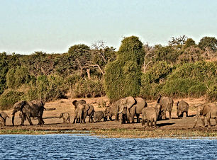 Chobe_National_Park_029.jpg