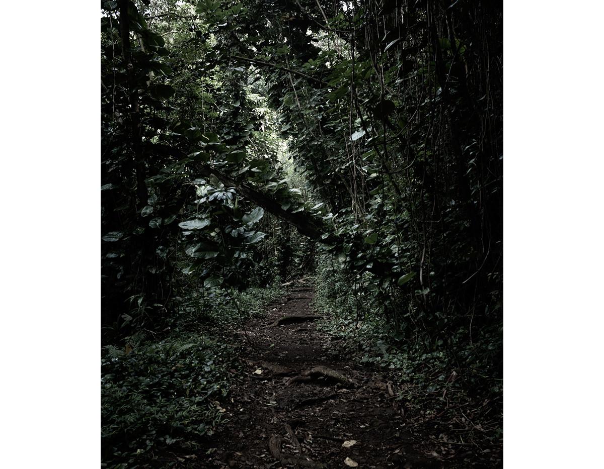 Haunted Woods in Hawaii 06