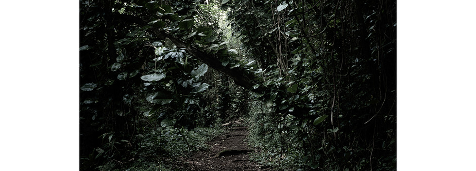 Haunted Woods in Hawaii 06