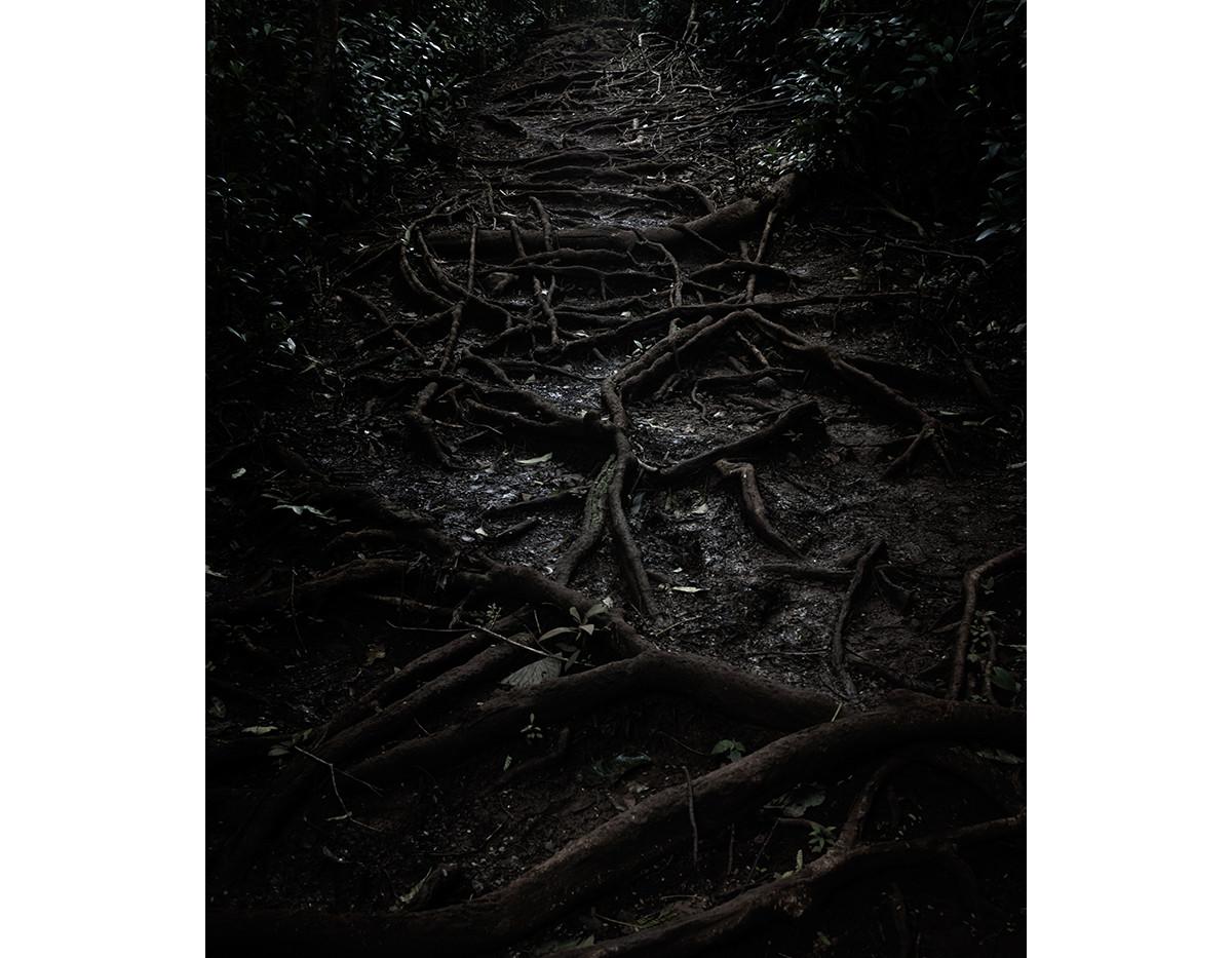 Haunted Woods in Hawaii 03