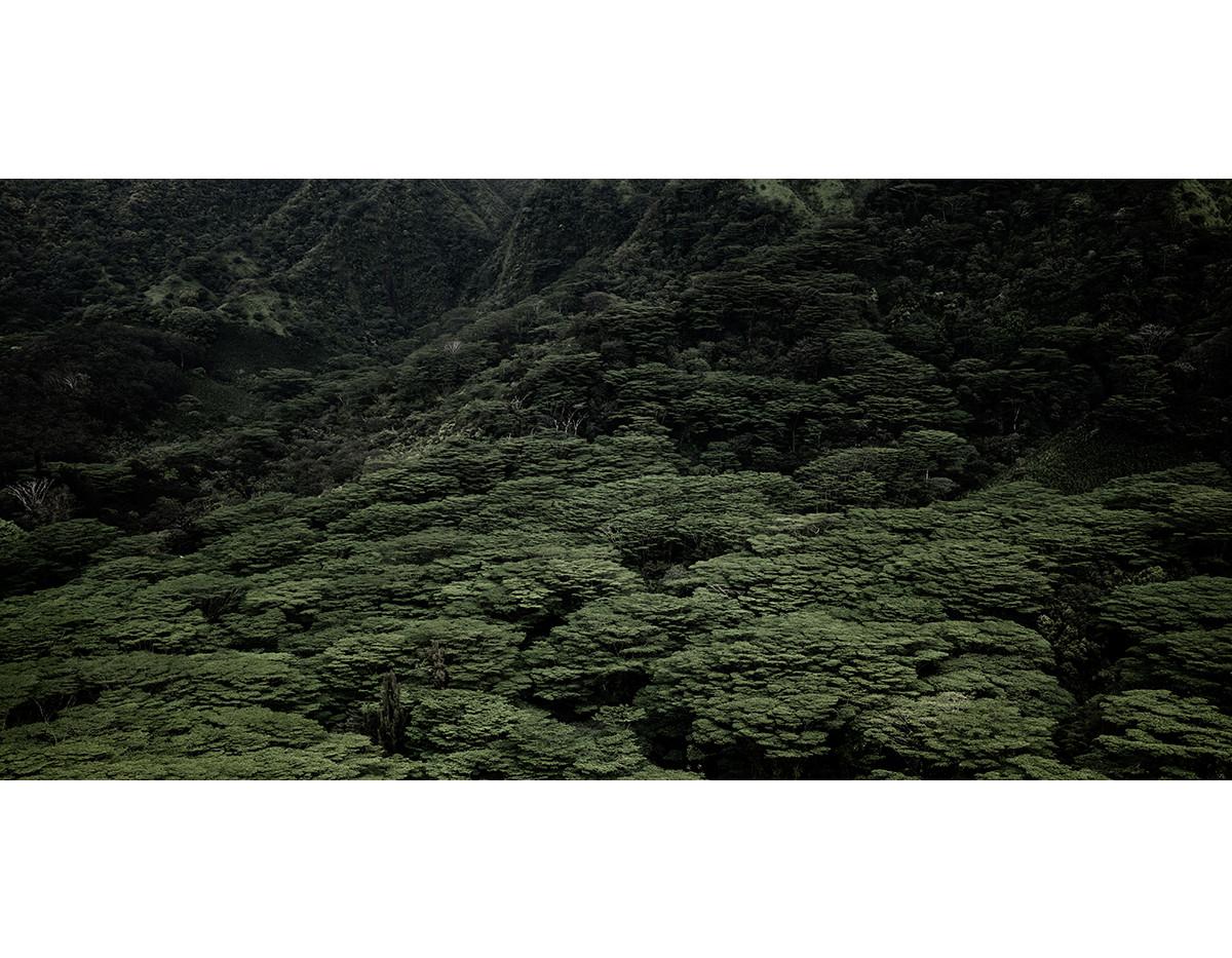 Haunted Woods in Hawaii 08