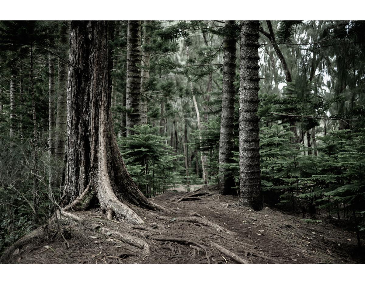 Haunted Woods in Hawaii 04
