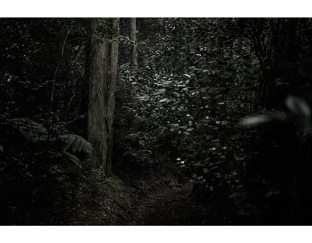 Haunted Woods in Hawaii 02