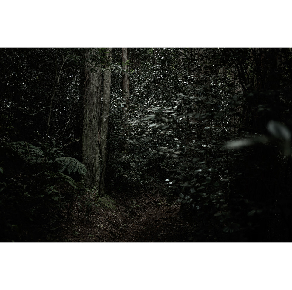 Haunted Woods in Hawaii 02