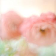 Series: Flowers II