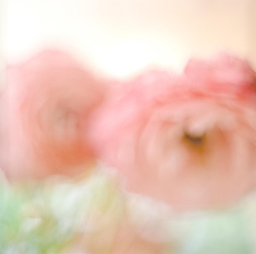 flowers II 01