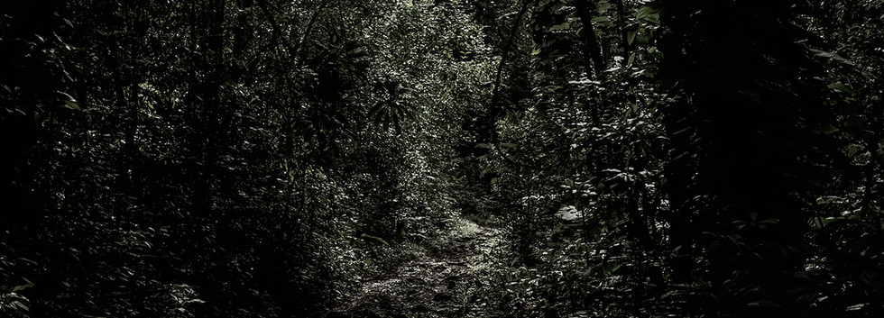 Haunted Woods in Hawaii 19