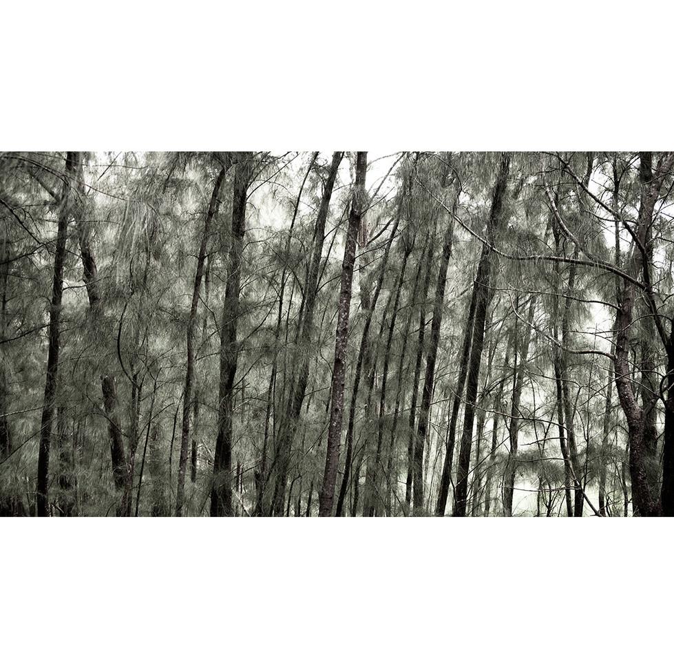 Haunted Woods in Hawaii 05