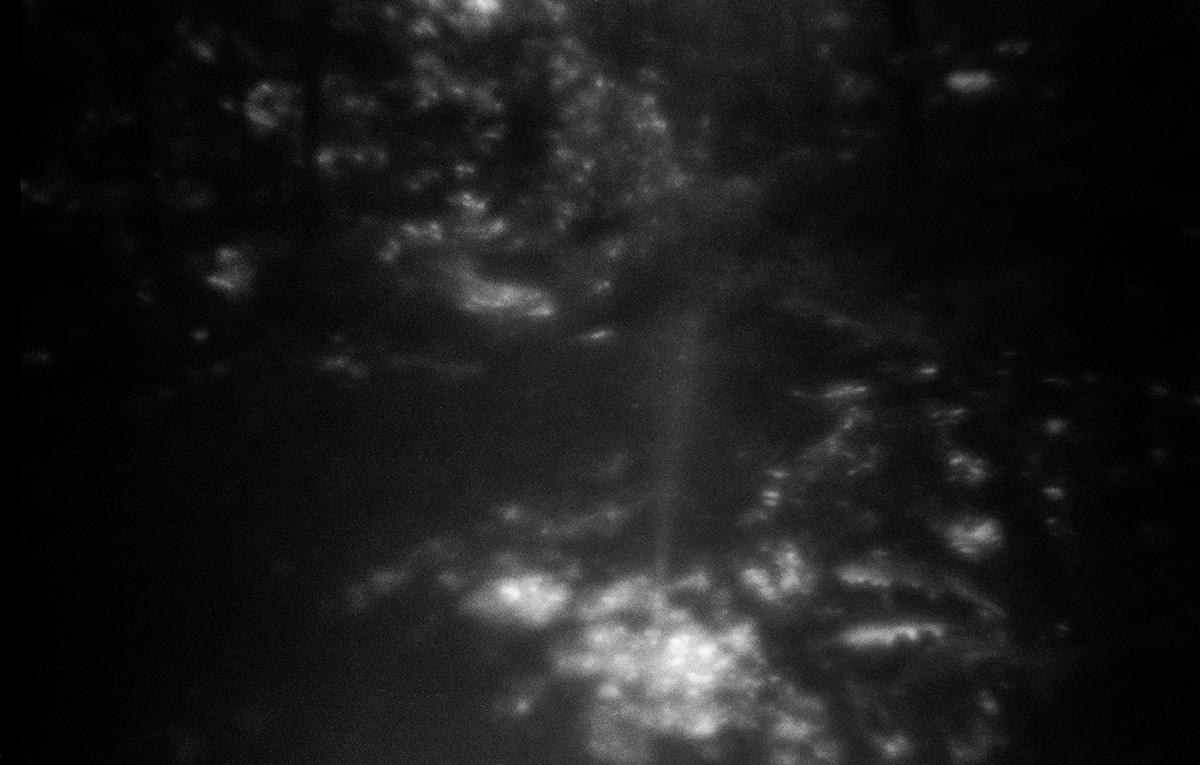 Phototaxis 10