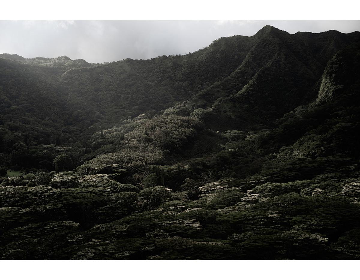 Haunted Woods in Hawaii 01