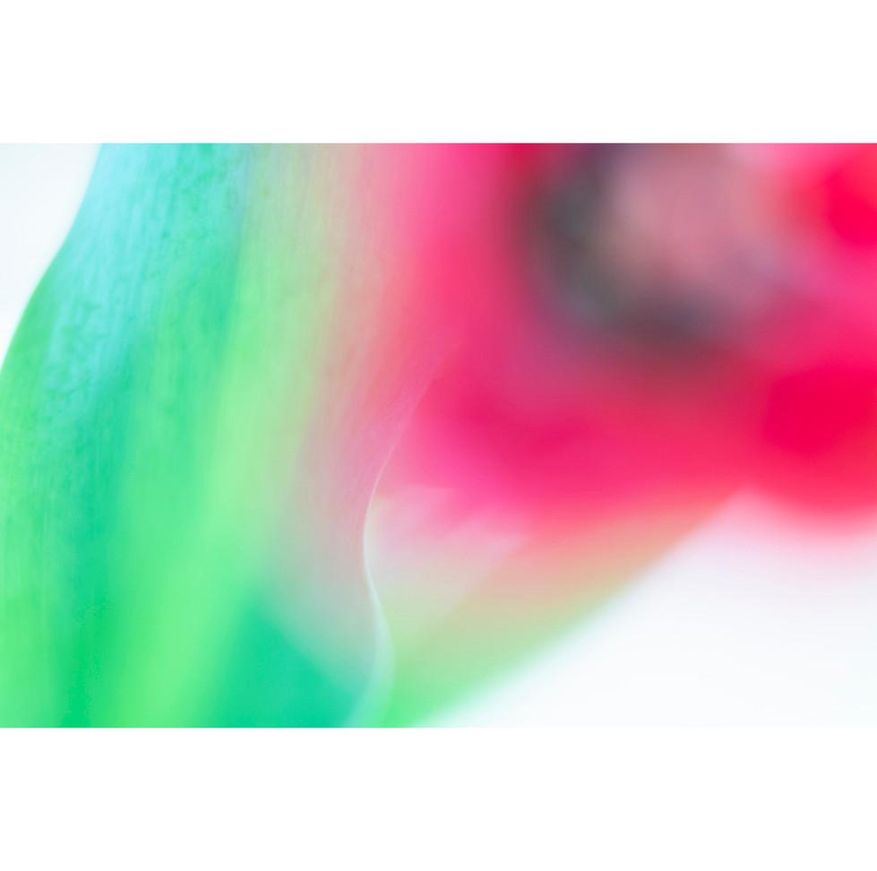 flowers III 03