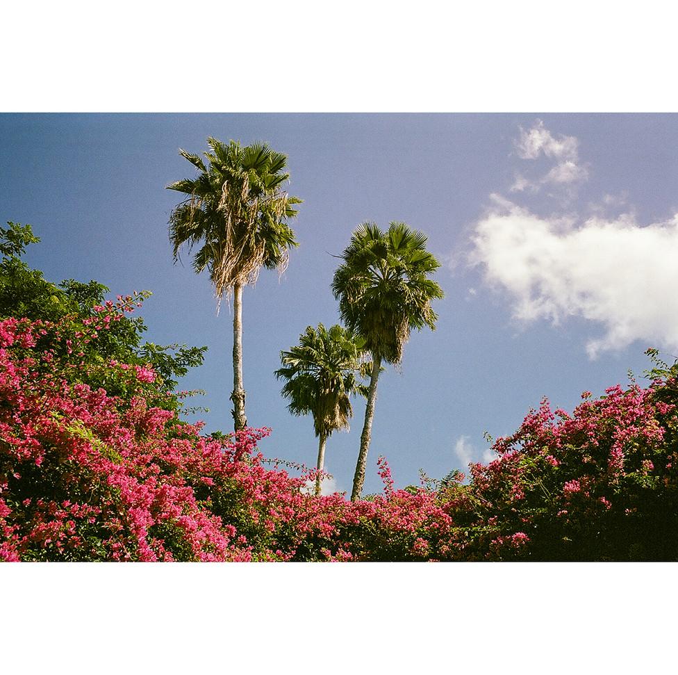 Journals of Waikiki 41
