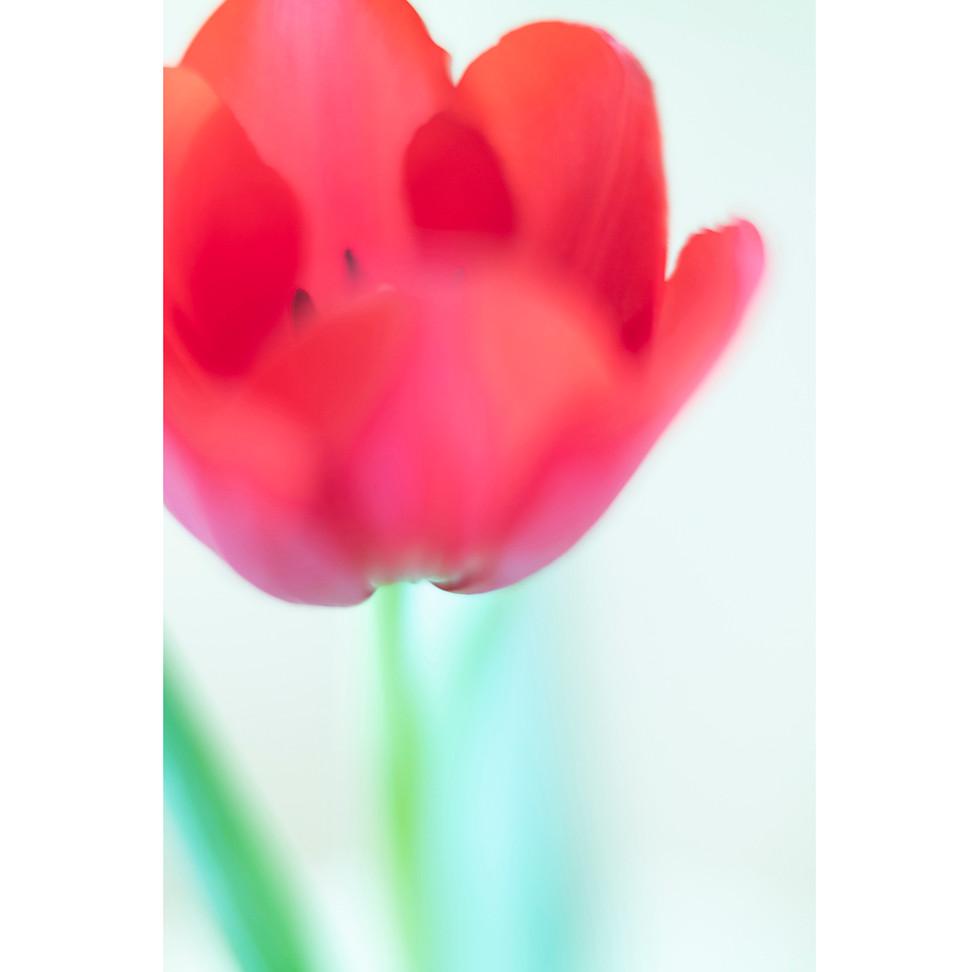 flowers III 01