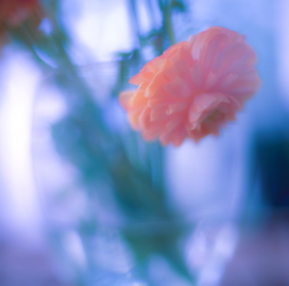 flowers II 02