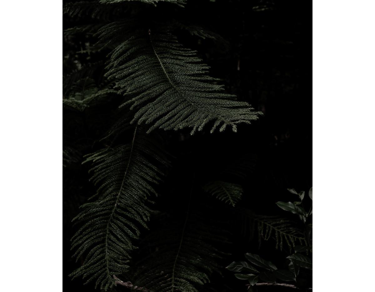 Haunted Woods in Hawaii 21