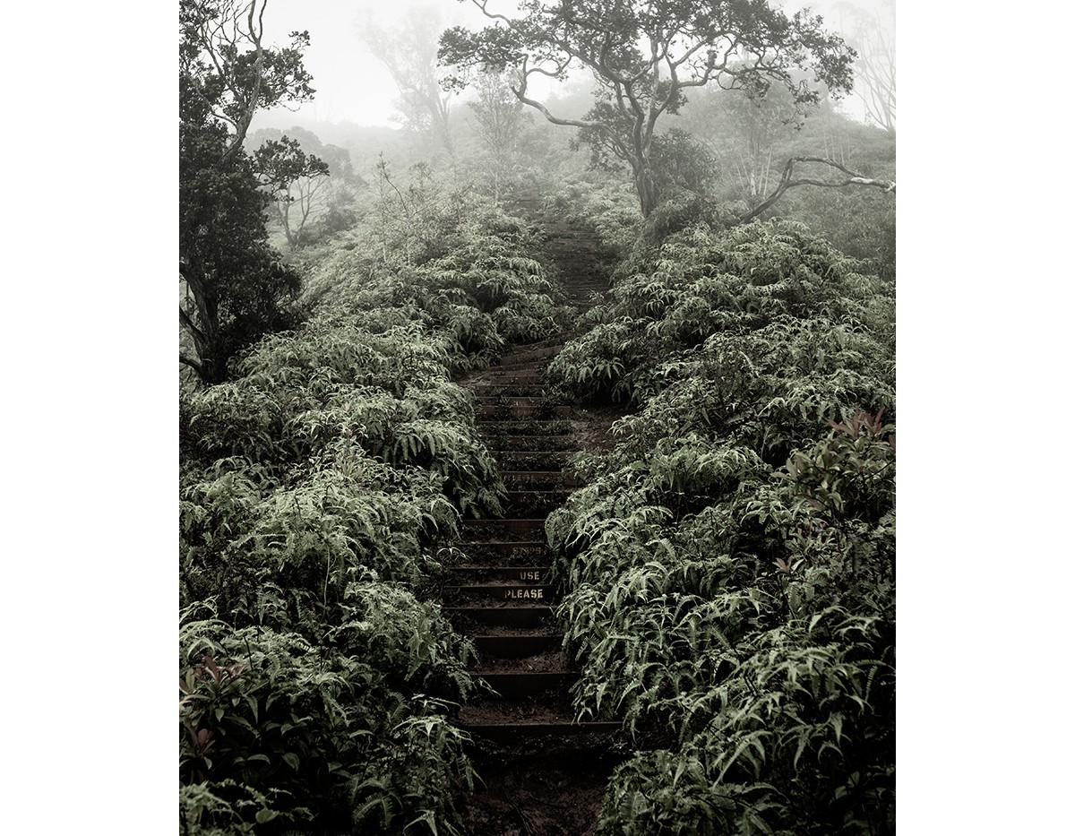 Haunted Woods in Hawaii 09