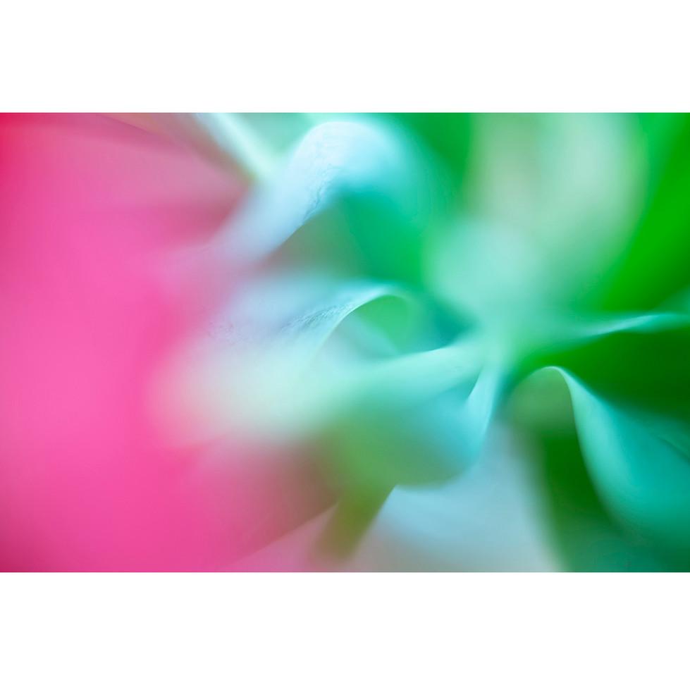 flowers III 05
