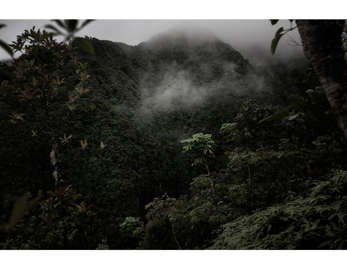 Haunted Woods in Hawaii 22