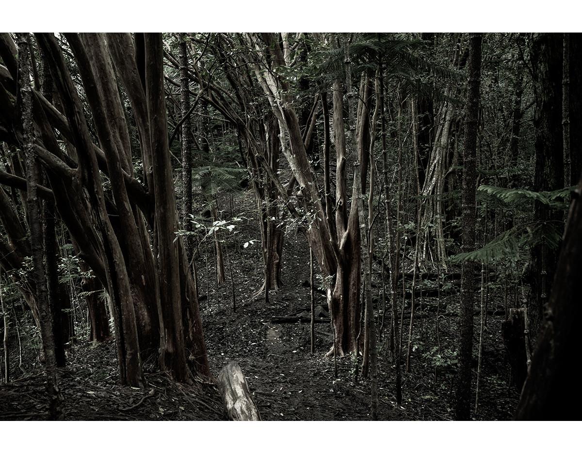 Haunted Woods in Hawaii 13