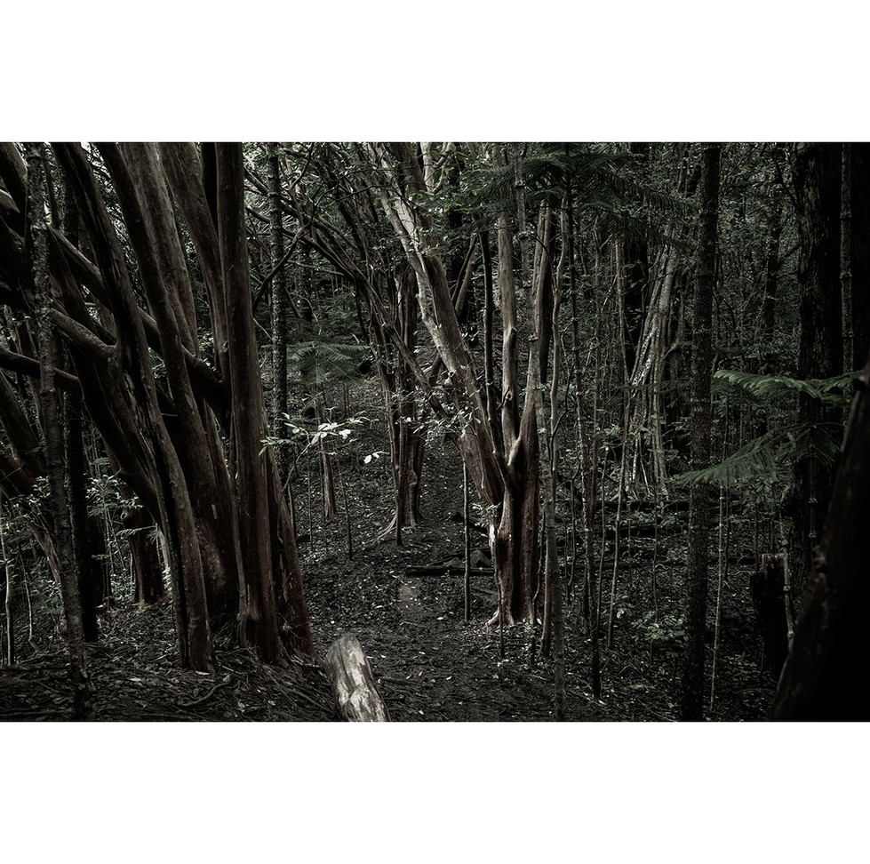 Haunted Woods in Hawaii 13