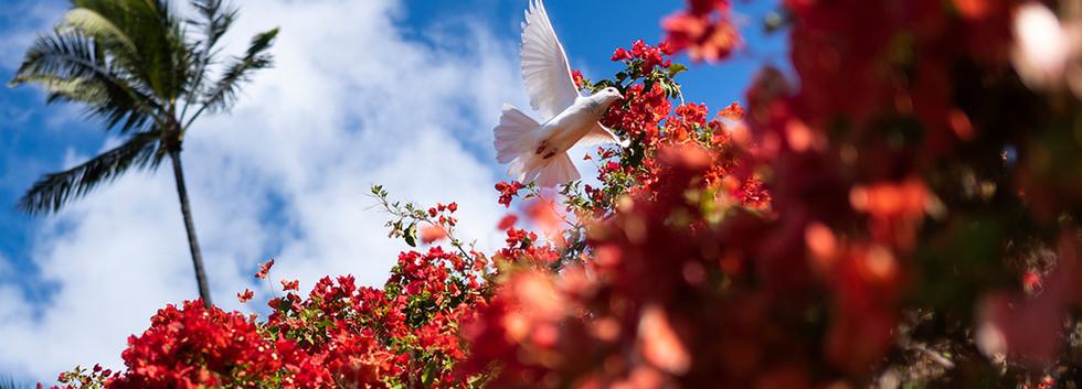 a bird singing blossom 03