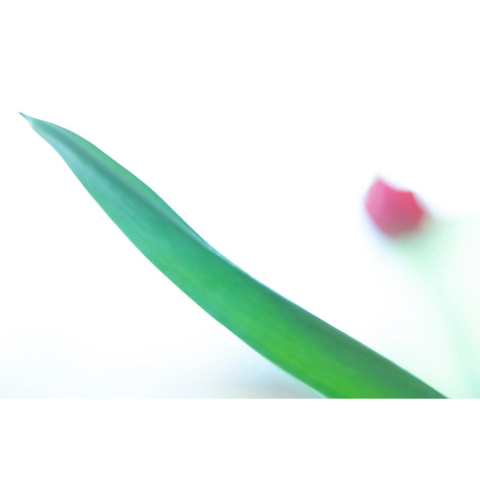 flowers III 02