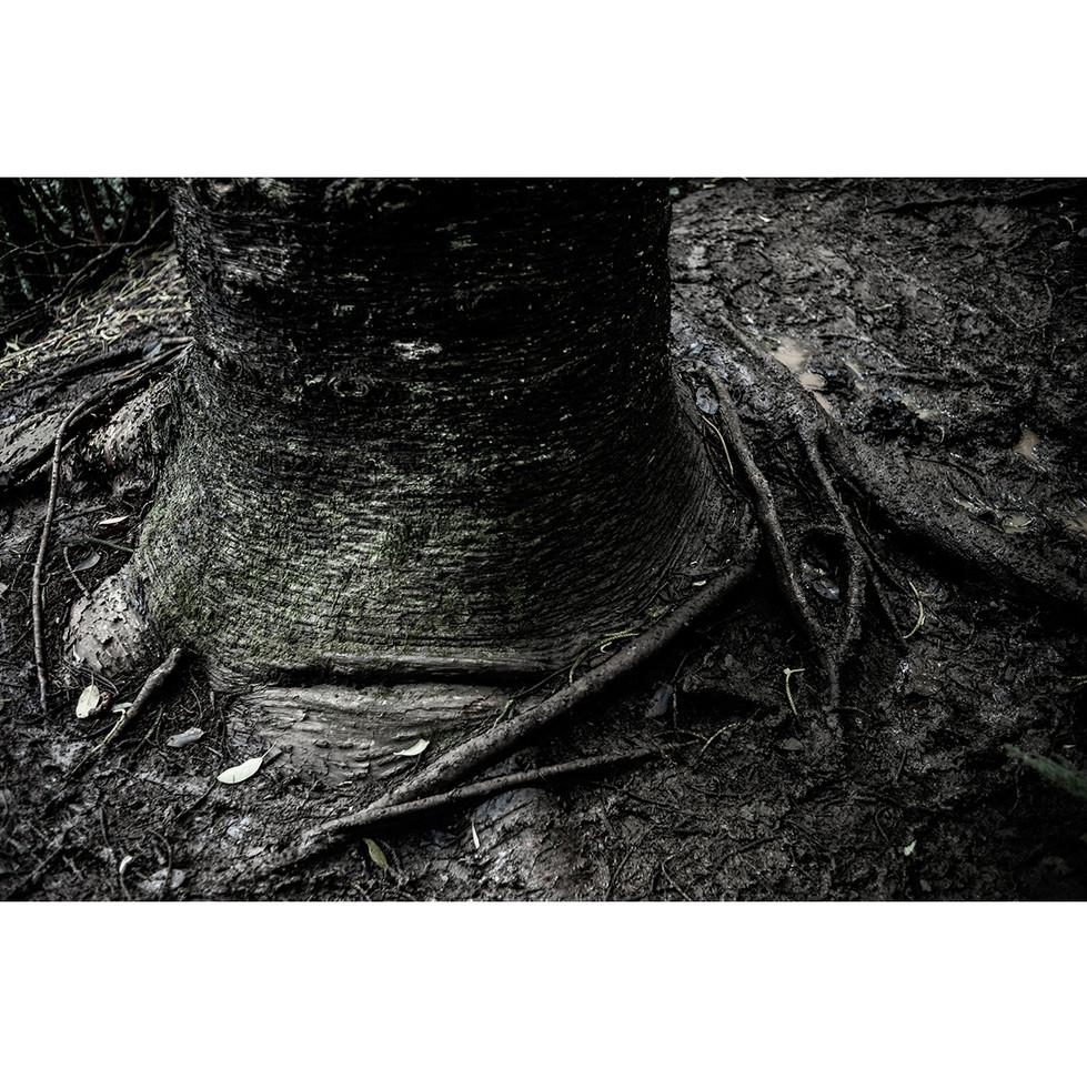 Haunted Woods in Hawaii 12