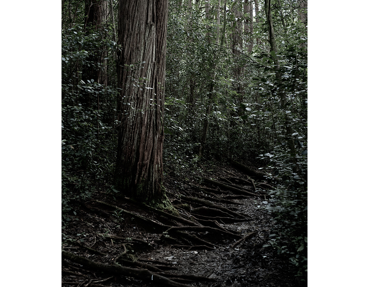 Haunted Woods in Hawaii 20