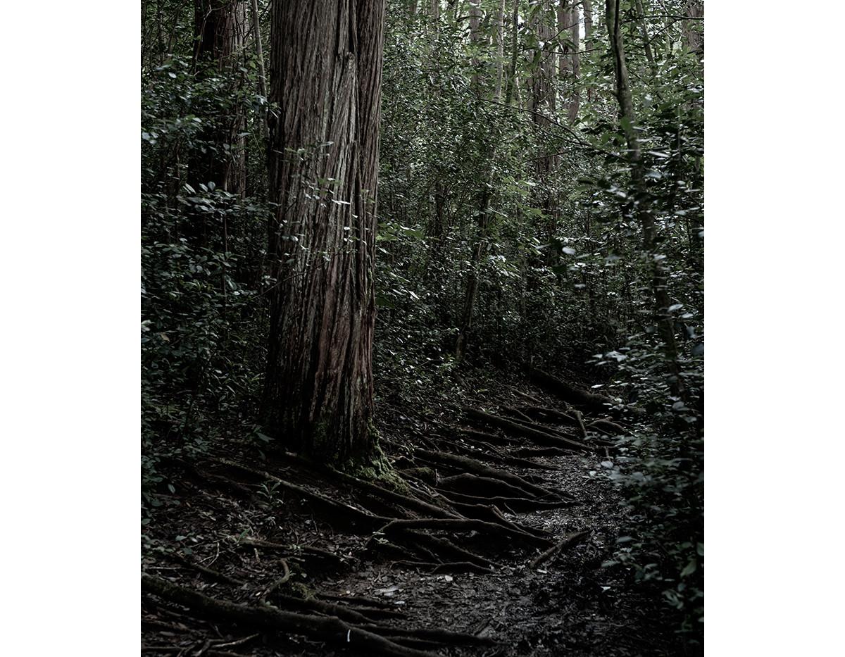 Haunted Woods in Hawaii 20