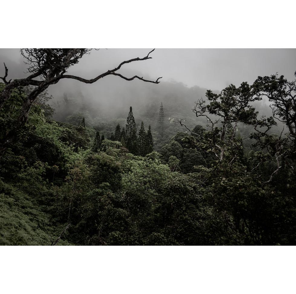 Haunted Woods in Hawaii 11
