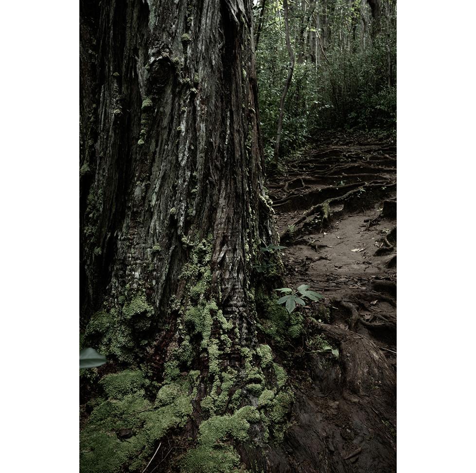 Haunted Woods in Hawaii 07