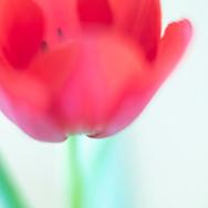 Series: Flowers III