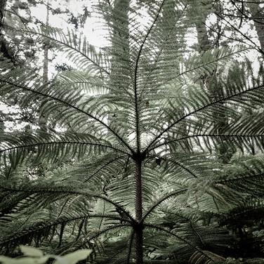 Series: Haunted Woods in Hawaii