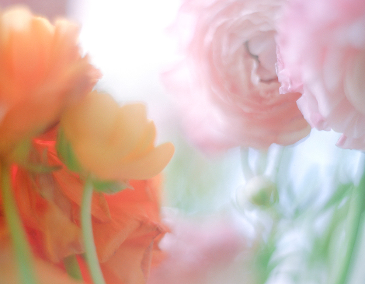 flowers II 03